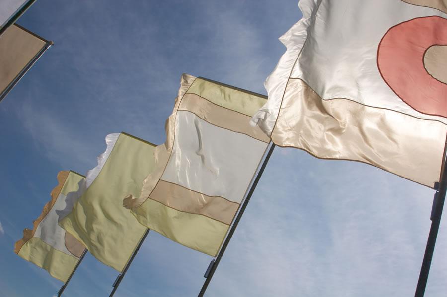liz 38 liz cooke flags